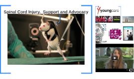 SC Injury.  Support and Advocacy