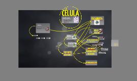 Células: Eucariontes y procariontes