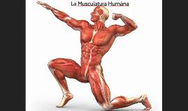 Prezi músculos anatomía