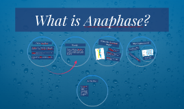What is Anaphase?
