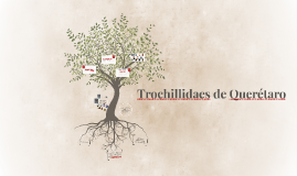 Trochillidaes de Querétaro