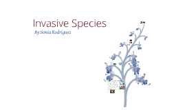 Copy of Invasive Species