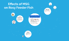 Effects of MSG on Rosy Feeder Fish