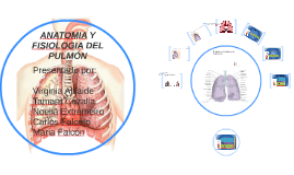 ANATOMIA Y FISIOLOGIA DEL PULMON