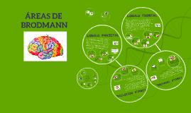 Copy of AREAS DE BRODMANN