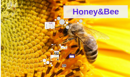 Copy of Honey&Bee