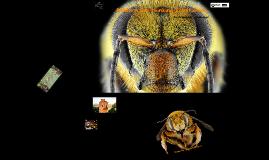 Modern bee-thinking & initiative..