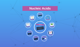 Copy of Nucleic Acids