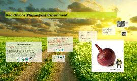 Red Onions Plasmolysis