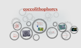 coccolithophores