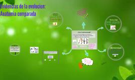 Copy of Evidencias de la evolucion: