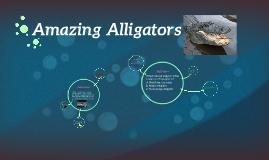 Amazing Alligators