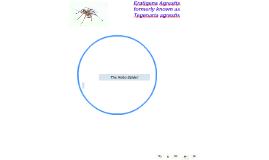The Hobo Spider AKA