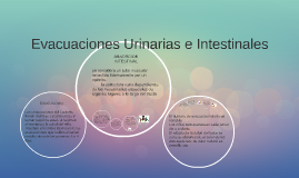Copy of Evacuaciones Urinarias e Intestinales