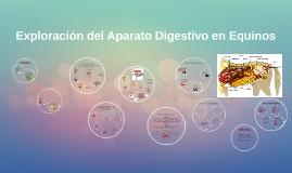 Copy of Exploración del Sistema Digestivo en Equinos