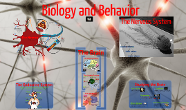 Psychology unit 2: Biology and Behavior