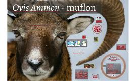 Ovis Ammon