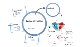 Copy of Review: Circulation