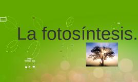 Copy of fotosintesis!