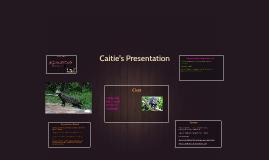 Caitie Tull