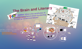 The Brain and Literacy