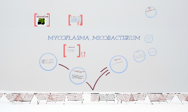 mycoplasma y mycobacterium