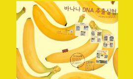 바나나 DNA 추출실험