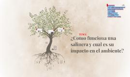 ¿Como funciona una salinera y cual es su impacto en el ambiente?