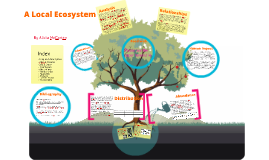 Copy of A Local Ecosystem