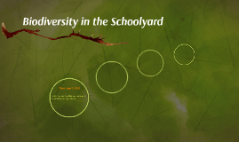 Biodiversity in the Schoolyard