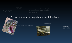 Anaconda's Ecosystem