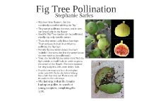Describe the amazing way in which fig trees are pollinated