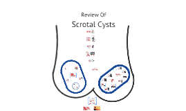 Copy of Scrotal Cysts