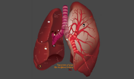 Regeneration of Lungs After Affect of Smoking