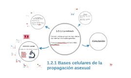 Asexuality definition francais