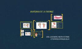 ANATOMIA E HISTOLOGIA DE LA FARINGE