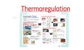 Copy of AP Bio- Energy 2: Thermoregulation