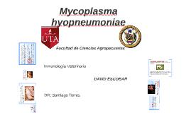 NEUMONIA MYCOPLASMICA