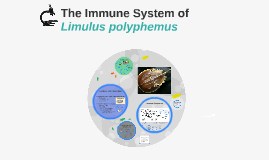 The Immune System of Limulus polyphemus