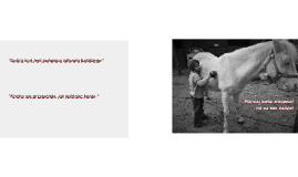 Interakcje człowiek - koń w hipoterapii