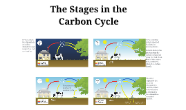 The Stages in the