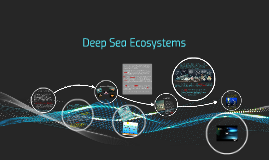 Deep Sea Ecosystems