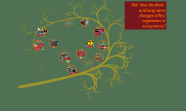 8.11C Environmental Changes