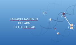 Copy of EMPAQUETAMIENTO DEL ADN