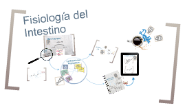 Copy of Fisiologia del Intestino