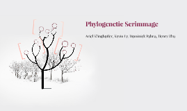Phylogenetic Scrimmage