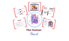 Copy of The Human Heart