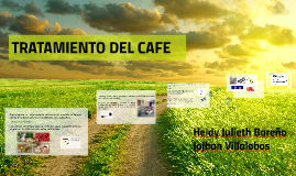 TRATAMIENTO DEL CAFE