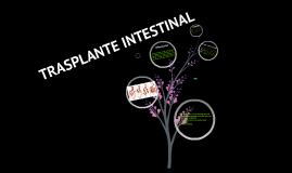 TRASPLANTE INSTESTINAL