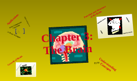 Chapter 3: The Brain